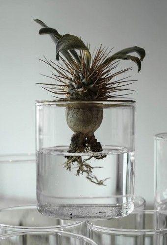 デザインユニット10¹² TERRAによる、VISION GLASSを使った植物の提案、「LiD of VISION GLASS」。