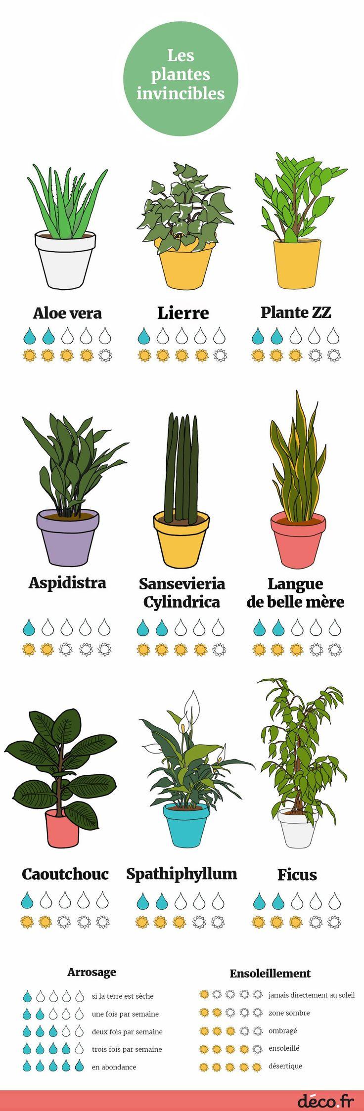 Infographie : les 9 plantes increvables.... Bon à connaître
