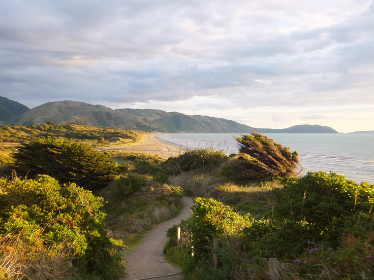 This is a fabulous walk, great for the whole family. Walk a loop, part on the beach and part in the bush.