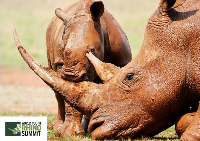It's #RhinoFriday and we can't think of a better picture...  #RhinoSummit2014 www.youthrhinosummit.com #rhino #wildlife #nature