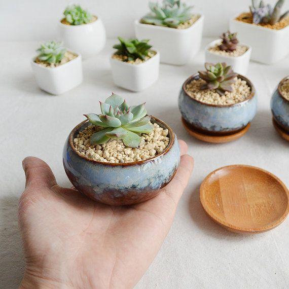 Suculenta cerámica vidriada plantador-cactus maceta por MarukoCoc