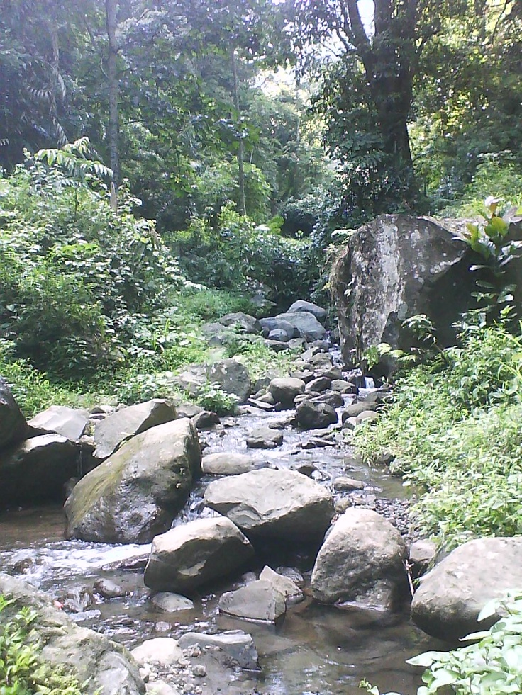 The scenery on the way to Semirang Waterfall, one of many nature tourism site in Semarang. From the entrance to the waterfall, we have to go uphill soooo far. Too bad, my cellphone's battery didn't last that far...  (November 26th, 2010 - Semirang Waterfall, Semarang, Central Java)