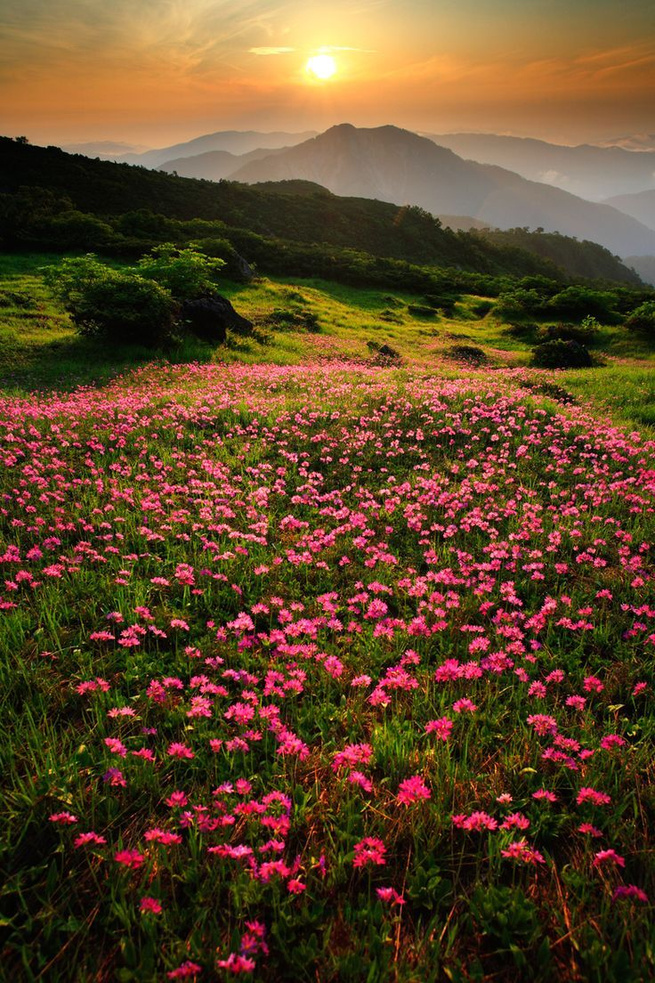 flowersgardenlove:  ✯ Field of Alpine Flowers Beautiful