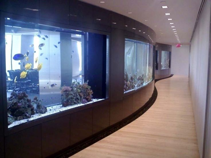 21 best living color aquariums residential images on for Wall hanging fish tank