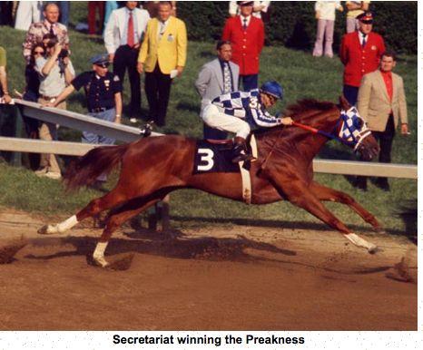 Secretariat's length of stride was quite impressive.  www.thewarmbloodhorse.com