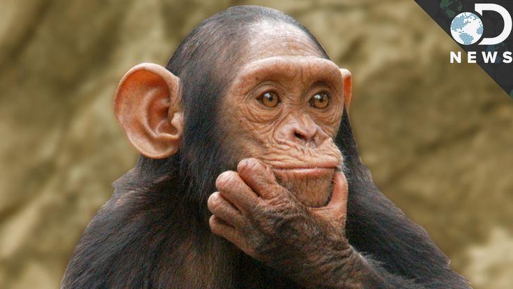 How Should We Define Intelligent Life?