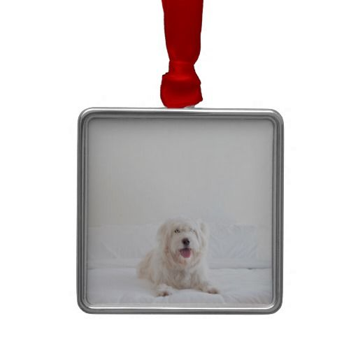 Lucy White Christmas Ornament #zazzle