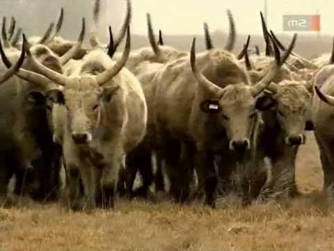 Magyarország Nemzeti Parkjai - Hortobágy - YouTube
