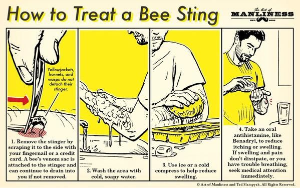 How To Treat A Bee Sting Survival Skills Survival Techniques Survival Tips
