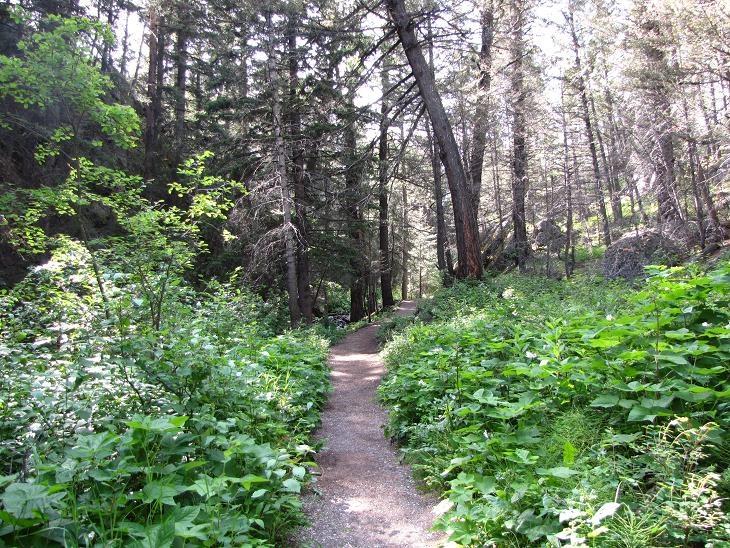 The Miner's Path. Coleman, Alberta