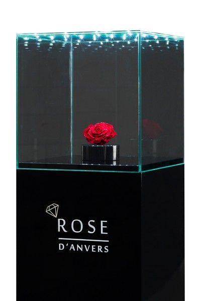 Het product stijlvol uitgelicht dankzij de mini LED lampjes in de glasplaat.