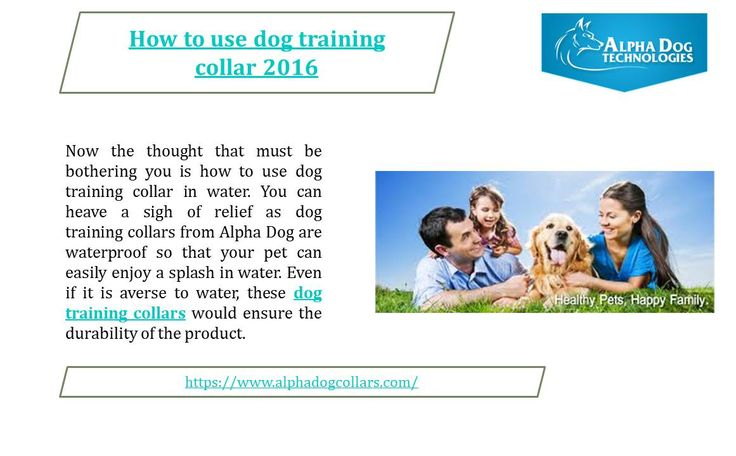 How to use dog training collar:-  Dog training collars from Alpha Dog have a range of 900 feet so that you can control your dog remotely. You now have the freedom to control the movement of your dog without chasing him. You can use dog training collar to decide the consequence according to the level of your pet's mischief with 3 different modes of vibrations and about 10 different levels of shock, thus making them ideal for dogs of all sizes and shapes - https://www.alphadogcollars.com/