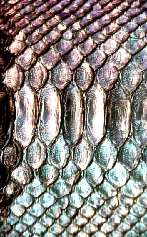 Shiny scales. | Textil | Pinterest