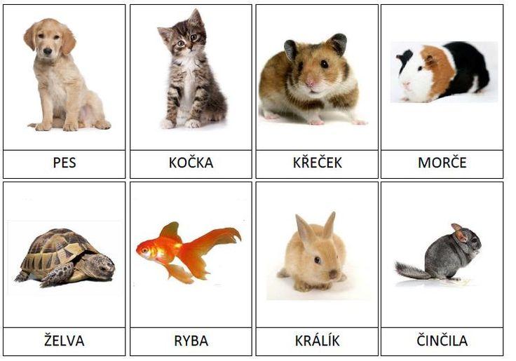 Kartičky s obrázky domácích zvířat.