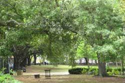 Pet-friendly Louis Armstrong Park in New Orleans, LA