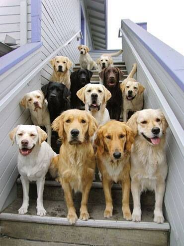 Everyone smile! Cutest family portrait ever. #dogs #animals #love