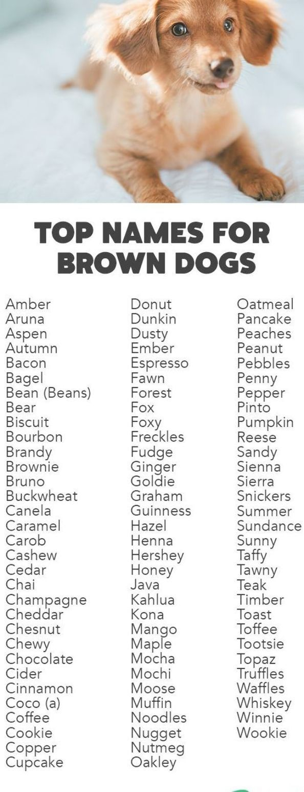 We Ve Rounded Up The Top Names For Brown Dogs And Brown Puppies Brown Dog Names Cute Names For Dogs Dog Names