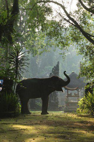 Holiday break 2012 - Elephant Safari Park Lodge, Bali, Indonesia