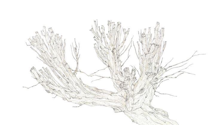 tree (850x480mm)