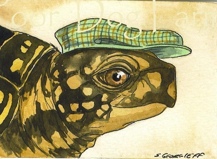 turtle in hat by sam georgieff barnyard pinterest Boy Room Sayings Artwork for Boys Room