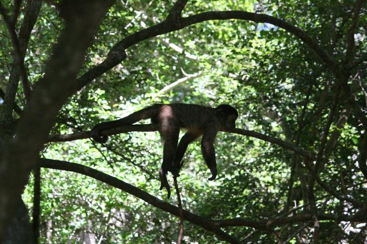 Sleeping Monkeyland. Monkeyland in #plett
