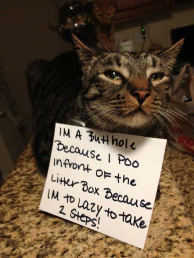 Lazy Cat Funny Animal Memes Pinterest Cats And Lazy Cat