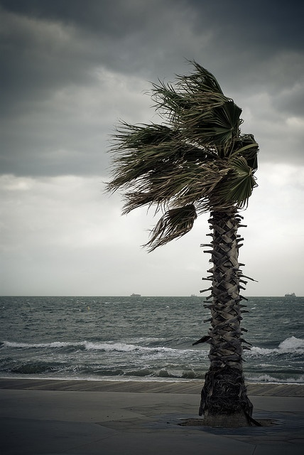In meteorology, winds are often referred to according to their strength, and the direction from which the wind is blowing. Short bursts of high speed wind are termed gusts. Strong winds of intermediate duration (around one minute) are termed squalls. Long-duration winds have various names associated with their average strength, such as breeze, gale, storm, hurricane, and typhoon.