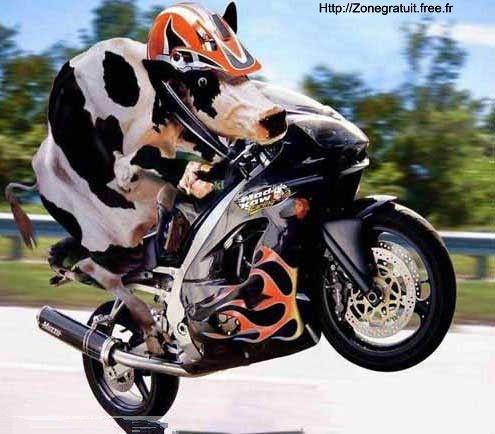 attention certains pilotent comme des vaches  ;-(