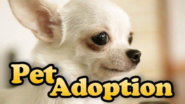 Pet Adoption Dubai Pet Adoption Pets Adoption