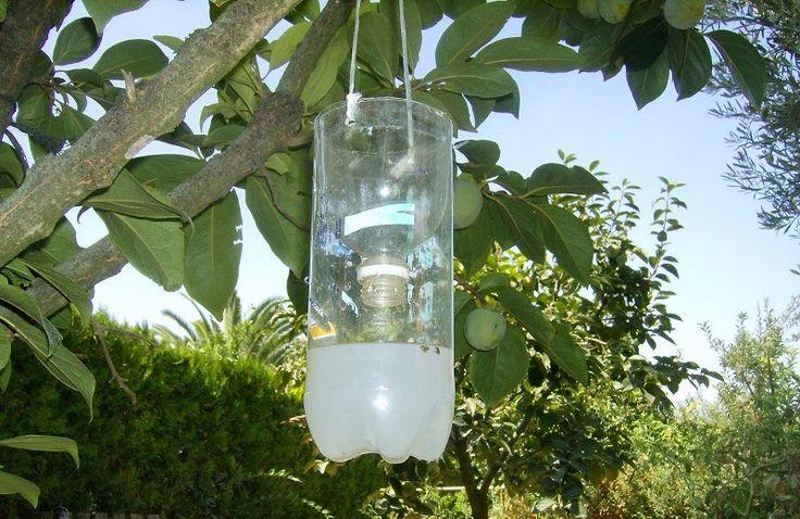 Cómo hacer 3 Trampas caseras para moscas - Vida Lúcida