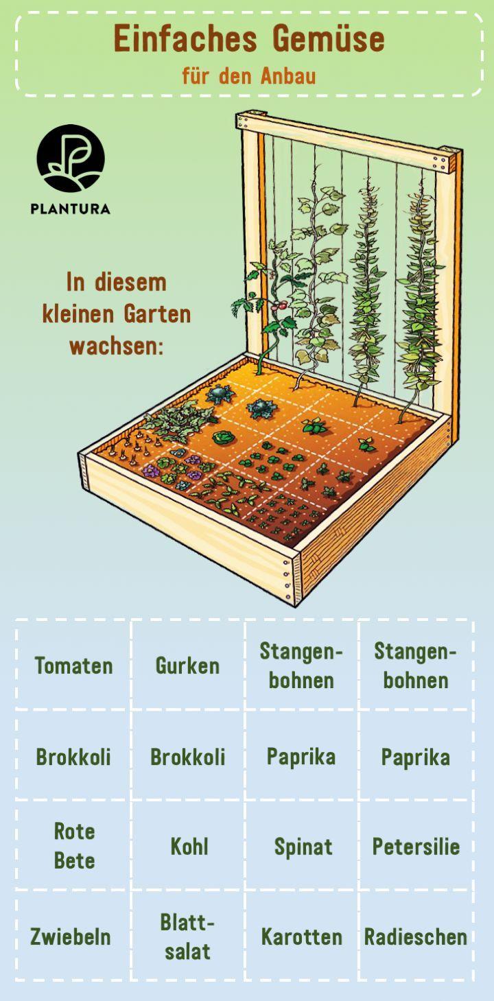 Einfaches Gemuse Fur Den Anbau In Diesem Kleinen Garten Konnen Verschiedene Pflanzen Wachsen Z B Tomaten G Hochbeet Bepflanzen Hochbeet Pflanzen Pflanzplan