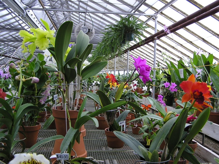 Going to the orchid greenhouse this weekend!