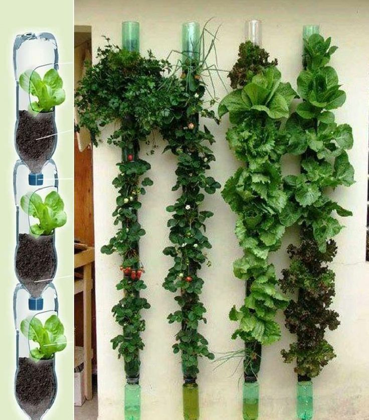 Vertical garden using plastic bottles