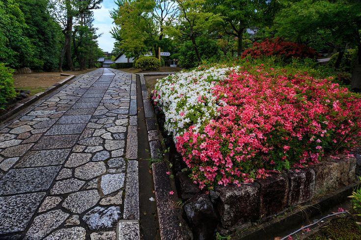 Garden path, Chishakuin / 智積院 京都