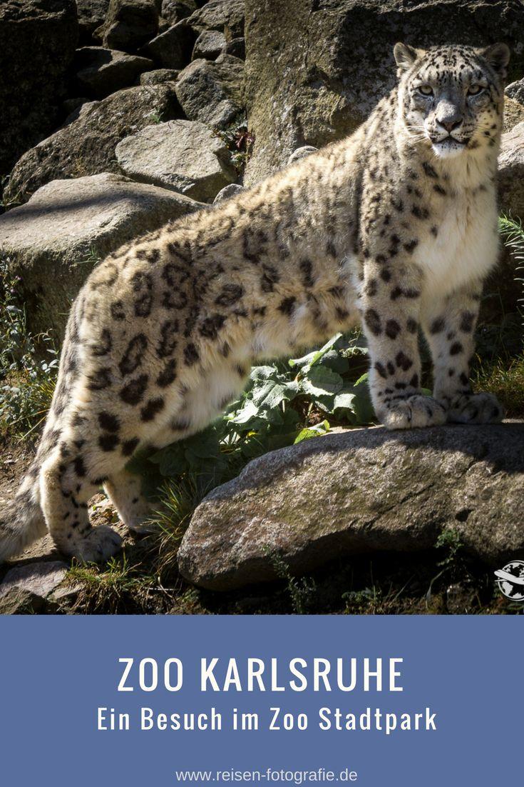 Perfect Ein Besuch im zoologischen Stadtgarten Karlsruhe wie der Zoo Karlsruhe richtig hei t mit tollen Bildern