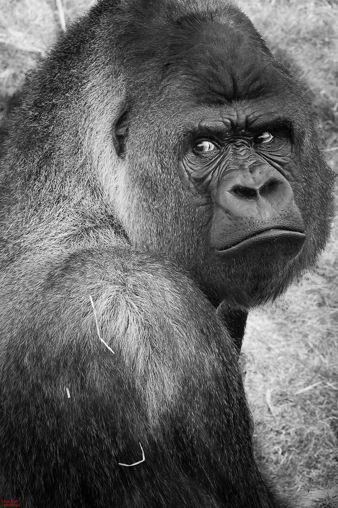 Monkey Glamour by FONSMM