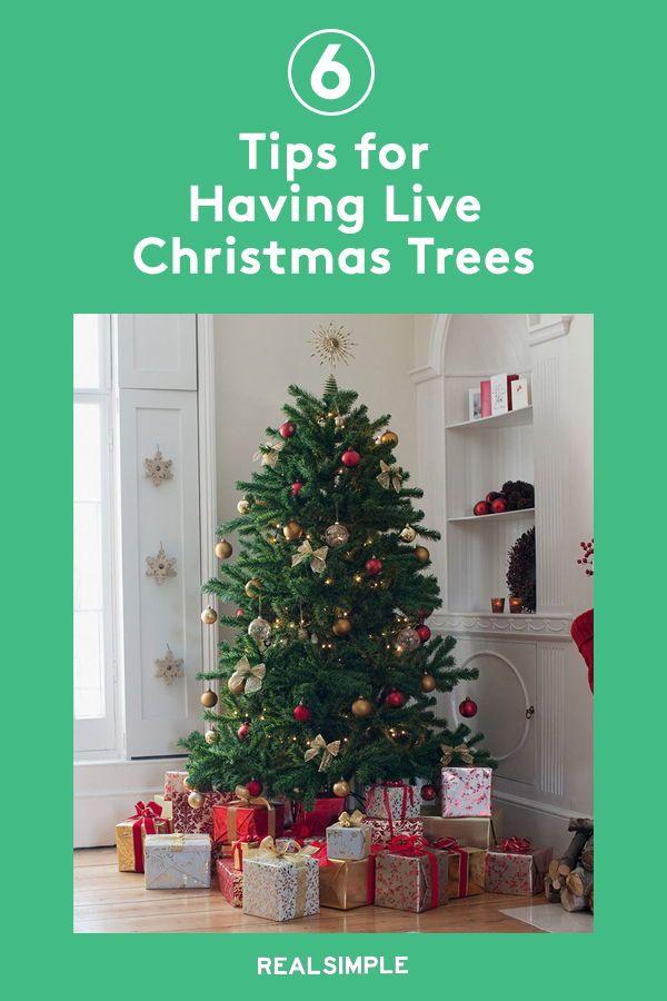 How To Keep Your Live Christmas Tree Fresher For Longer Christmas Tree Cool Christmas Trees Real Christmas Tree