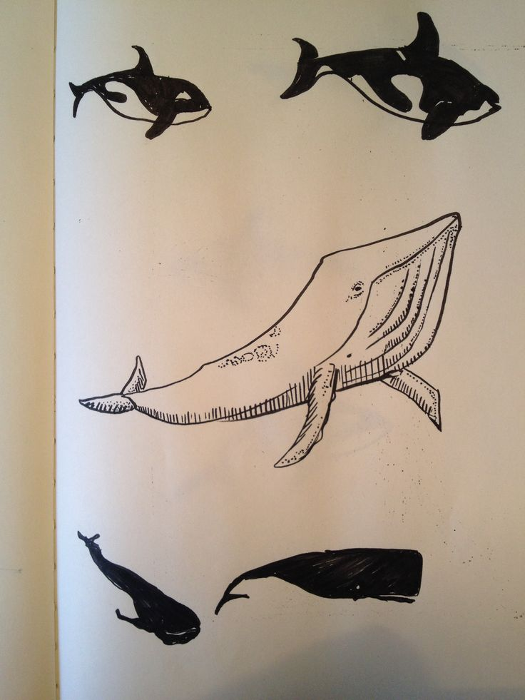 Shape of whales.