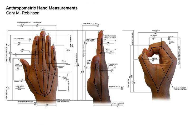 anthropometric hand data