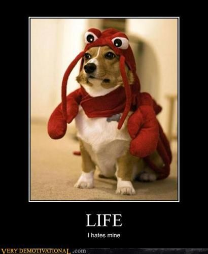 JAJAJAJAJAJA: Red Lobsters, Funny Dogs, Halloween Costumes, Baby Shower Ideas, Demotivational Posters, Happy Dogs, Pet Humor, Funny Puppies, Dogs Life