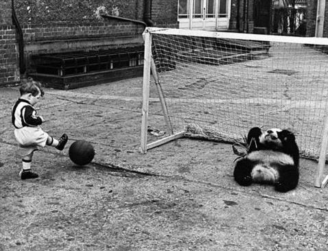 Panda playing football. #vintage #football #photo #pandas