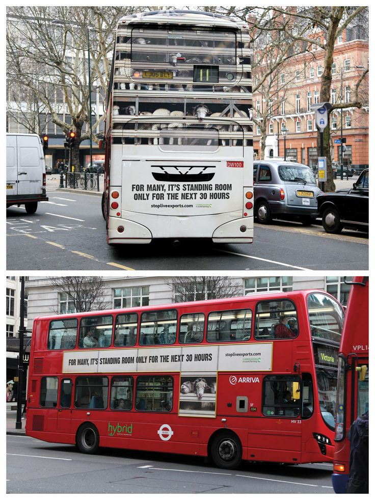 creative thinking .. stop live exports