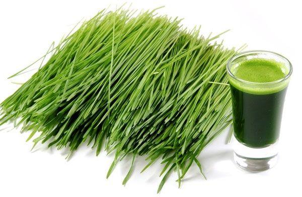 Zielona żywność - Dzieci są ważne