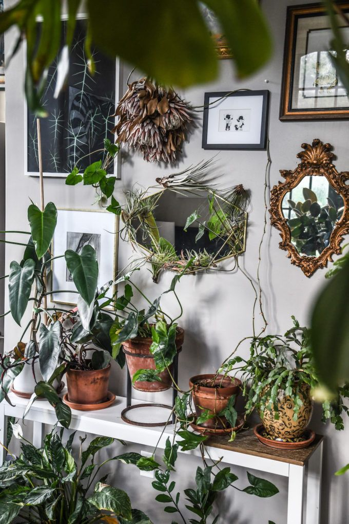 Potted and climbing plants with vintage mirrors and artworks in the bedroom. Tagged: Bedroom and Bench. Photo 11 of 15 in Designer Hilton Carter's Bodacious Baltimore Pad Teems With Over 300 Plants. Browse inspirational photos of modern bedrooms. Wall Climbing Plants, Plantas Indoor, Low Light Plants, French Country Bedrooms, Bedroom Plants, Plant Rooms, Bedroom Decor, Vintage Mirrors, Big Leaves