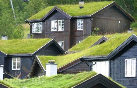 Сад на крыше— преимущества, разновидности, обустройство своими руками