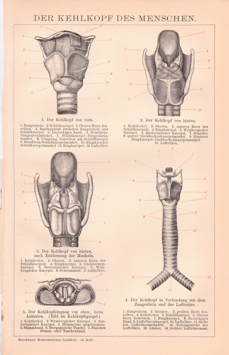 87 best Anatomy Prints images on Pinterest | Med school, Medical and ...