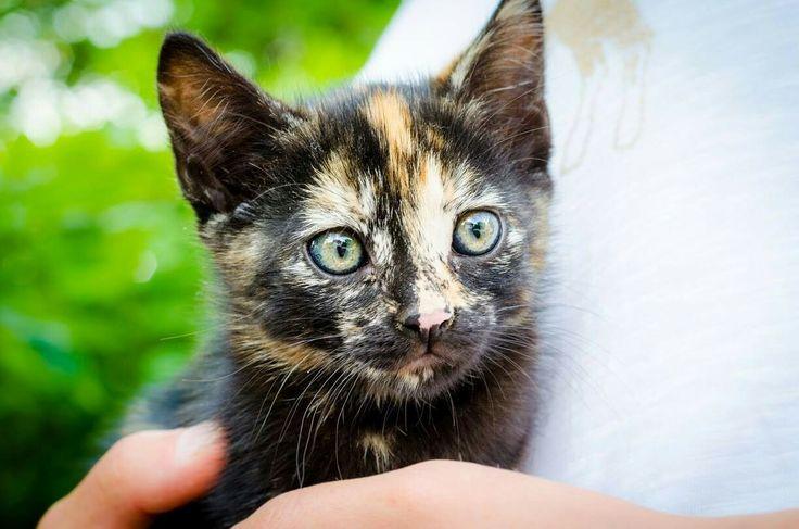 Pisicuți disponibili pentru adopție