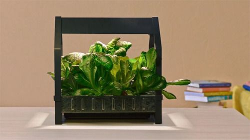IKEA has introduced KRYDDA / VÄXER series,  a hydroponic indoor gardening system! It seems so simple a child could do it and yet so futuristic.