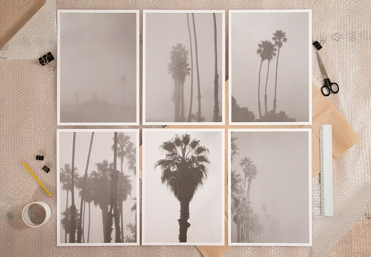 Zin Taylor, Living systems  narrative haze (a sequence of palm trees obscured by the fog), 2013 6 duotone prints 29.7 x 42 cm – 11.69 x 16.54 in Edition of 50, signed and numbered Paper: Fedrigoni Sirio White/White 280 g/m2 € 300