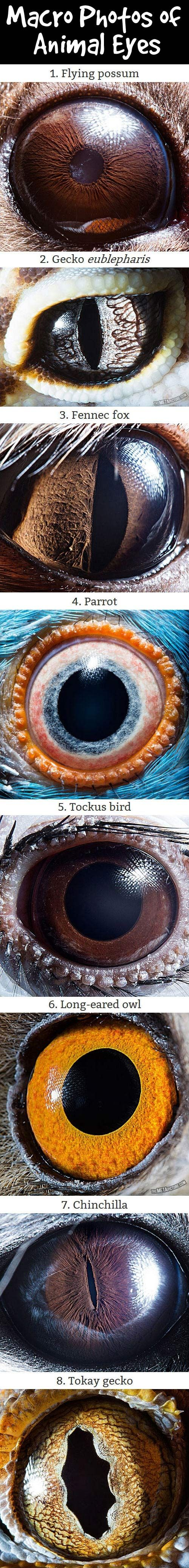 Macro photos of animal eyes.